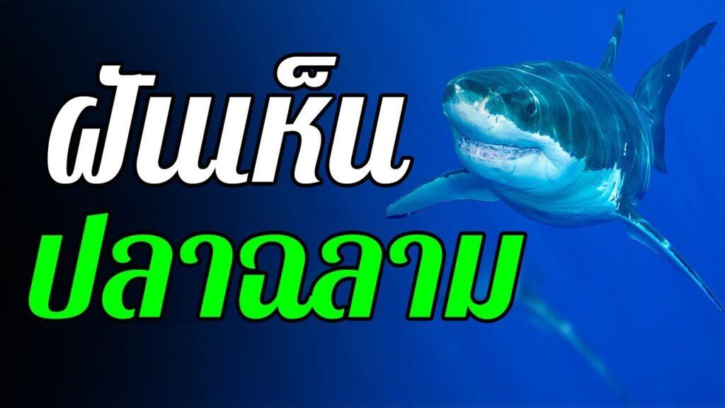 ทำนายฝัน ฝันเห็นฉลาม เลขเด็ด ฝันเห็นฉลาม แม่นๆ